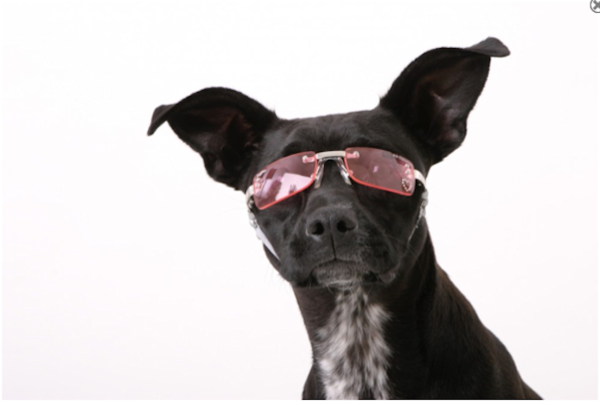 Dogs Inspired Niche Business Doggles
